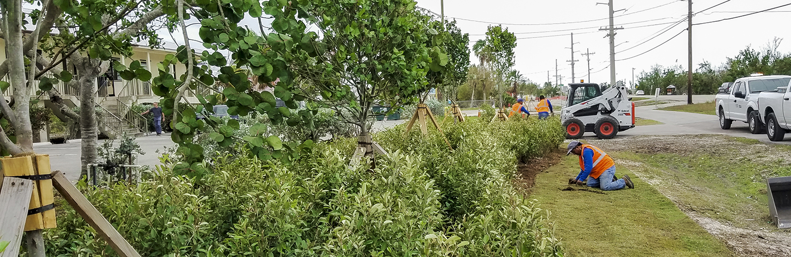 Landscape Planting along SR 5/Overseas Highway in Big Pine Key